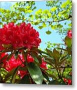 Rhodies Art Prints Red Rhododendron Floral Garden Landscape Baslee Metal Print