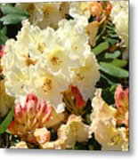 Rhodies Creamy Yellow Orange 3 Rhododendrums Gardens Art Baslee Troutman Metal Print