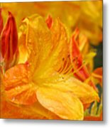 Rhodies Orange Yellow Rhododendrons Art Prints Canvas Baslee Troutman Metal Print