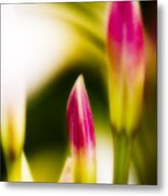 Rhododendron Buds Metal Print
