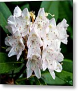 Rhododendron Family Of Flowers Metal Print