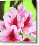 Rhododendron Floral Art Prints Rhodies Flowers Canvas Baslee Troutman Metal Print