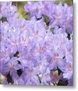 Rhododendron Floral Flowers Lavender Purple Prints Baslee Metal Print