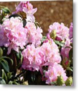 Rhododendron Flower Garden Art Prints Canvas Pink Rhodies Baslee Troutman Metal Print