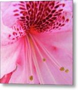 Rhododendron Flower Macro Pink Rhodies Baslee Troutman Metal Print