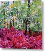 Rhododendron Glade Norfolk Botanical Garden 201821 Metal Print