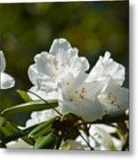 Rhododendron II Metal Print