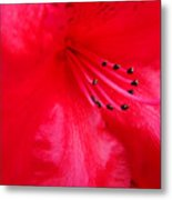 Rhododendron Macro Red Rhodie Art Print Baslee Troutman Metal Print