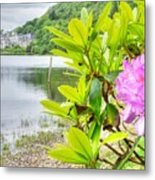 Rhododendron On Lake Kylemore, Kylemore Abbey Galway Metal Print