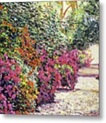 Rhododendron Pathway Exeter Gardnes Metal Print by David Lloyd Glover