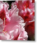 Rhododendrons Art Prints Floral Pink Rhodies Canvas Baslee Troutman Metal Print