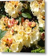 Rhododendrons Garden Art Prints Creamy Yellow Orange Rhodies Baslee Metal Print