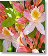 Rhododendrons Garden Floral Art Print Pink Rhodies Metal Print
