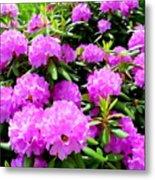 Rhododendrons In Bloom Metal Print