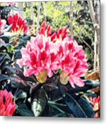 Rhododendrons Of British Properties Metal Print by David Lloyd Glover