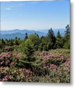 Rhododendron On Roan Mountain Metal Print