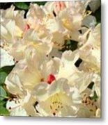 Rhododenrons Floral Art Prints Yellow Pink Rhodies Baslee Troutman Metal Print