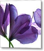 Rhody Ballet-purple Metal Print