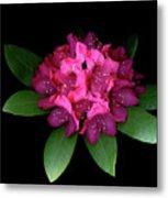 Rhody Queen - Red Metal Print