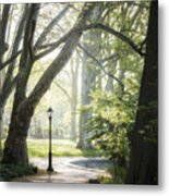 Rhythm Of The Trees Metal Print