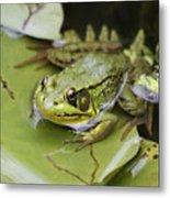 Ribbet In The Pond Metal Print