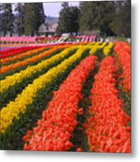 Ribbons Of Color Metal Print