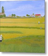 Rice Field In Northern Vietnam Metal Print