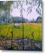 Rice Fields At Bumi Agung Lampung Sumatra Indonesia 2008  Metal Print