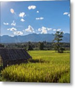 Rice Fields Of Thailand Metal Print