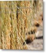 Rice Harvest - Haiku Metal Print