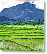 Rice Paddies And Mountains Metal Print