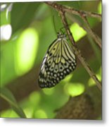 Rice Paper Butterfly Clinging To A Tree Branch Metal Print