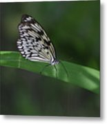 Rice Paper Butterfly On A Long Daylily Leaf Metal Print