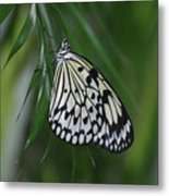 Rice Paper Butterfly Sitting On Green Foliage Metal Print