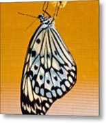 Rice Paper Out From Chrysalis Metal Print