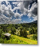 Rice Terrace Metal Print