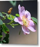 Rimrock Rose Metal Print