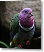 Ring Necked Dove Metal Print