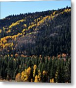 Rio Grande National Forest Metal Print