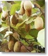 Ripe Kiwi Fruit On The Branch Metal Print