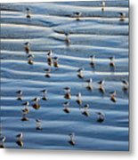 Ripples Of Sand Dotted With Plovers Metal Print