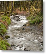 River Forest Metal Print