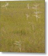 River Of Grass 1a Metal Print