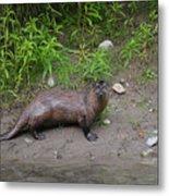 River Otter Metal Print
