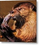 River Otter With His Catch Of The Day Metal Print