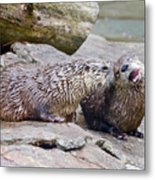 River Otters Metal Print