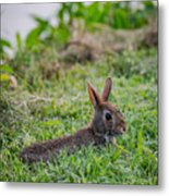 River Rabbit Metal Print