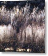 River Sage Metal Print