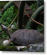 River Turtle 1 Metal Print