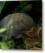 River Turtle 2 Metal Print
